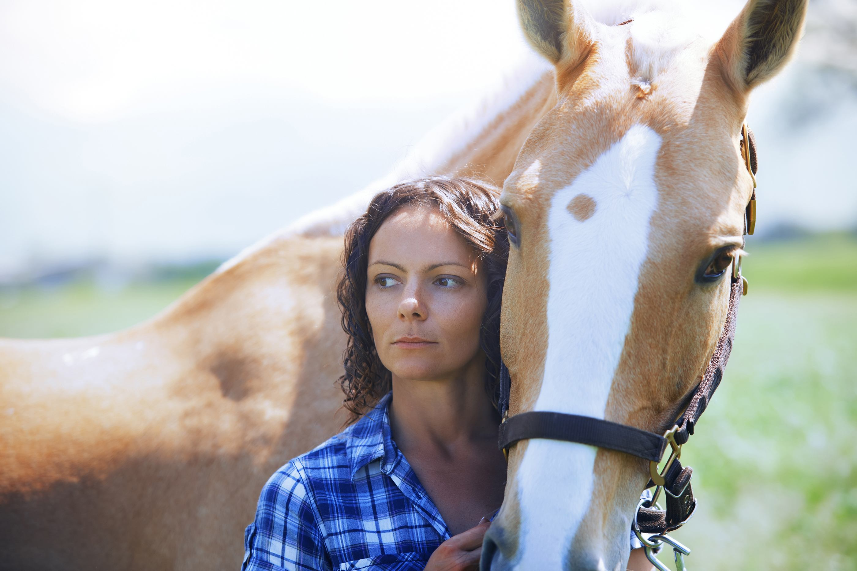 The Equine Hindgut: What's Really Wrong With My Horse?