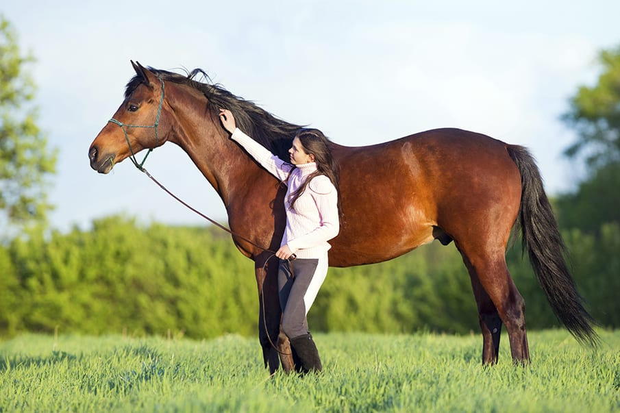60 Days To A Healthier Horse – Naturally