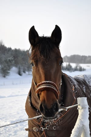 Reasons for Horses Winter Weight Loss. Equine Winter ...