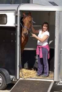 Horse In Trailer for Relocation
