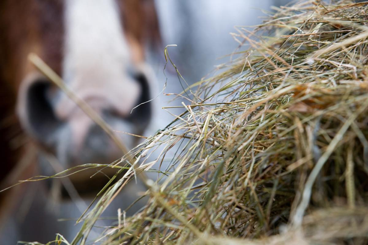 Hay with Horse in Background