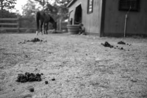 horse manure in paddock