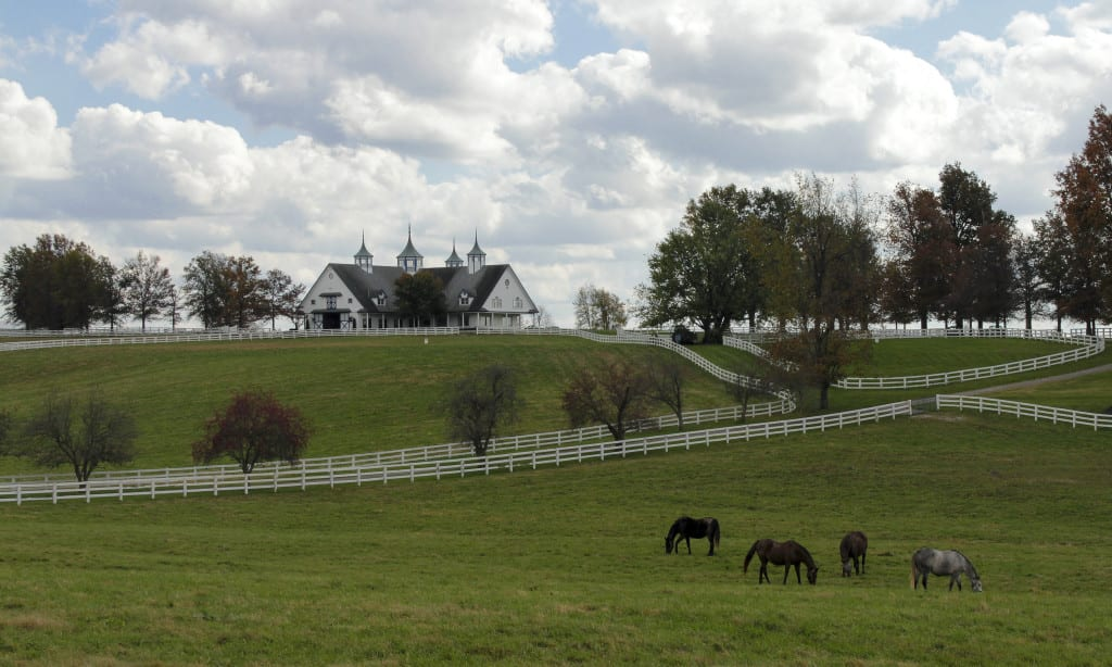 Healthy Horse Pastures