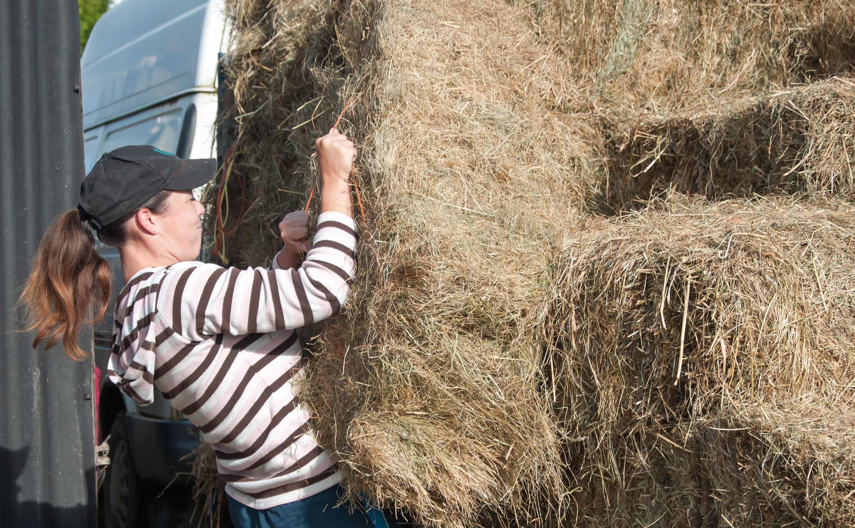 Horses and Hay: Best Types of Hay for