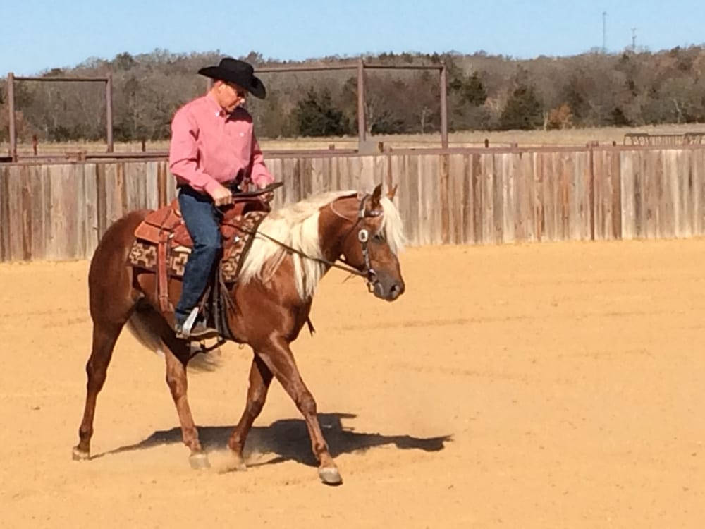 Ron Ralls' Reined Cow Horses Maintained on SUCCEED