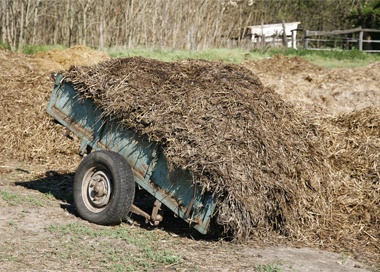 healthy-manure