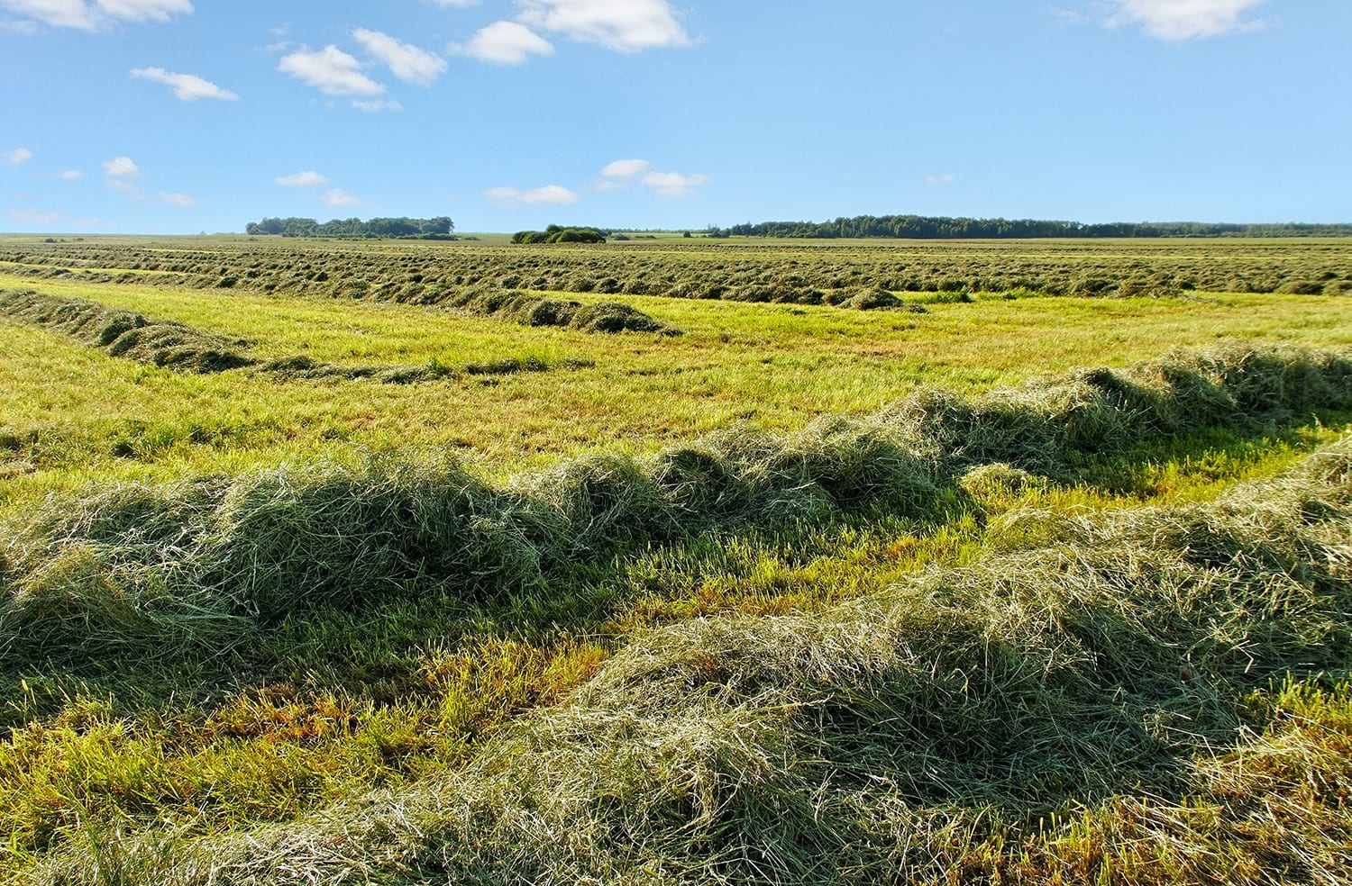 Second Cutting Hay