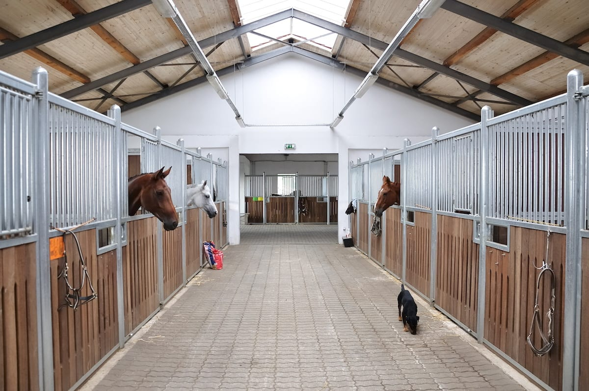 Horses in clean white barn