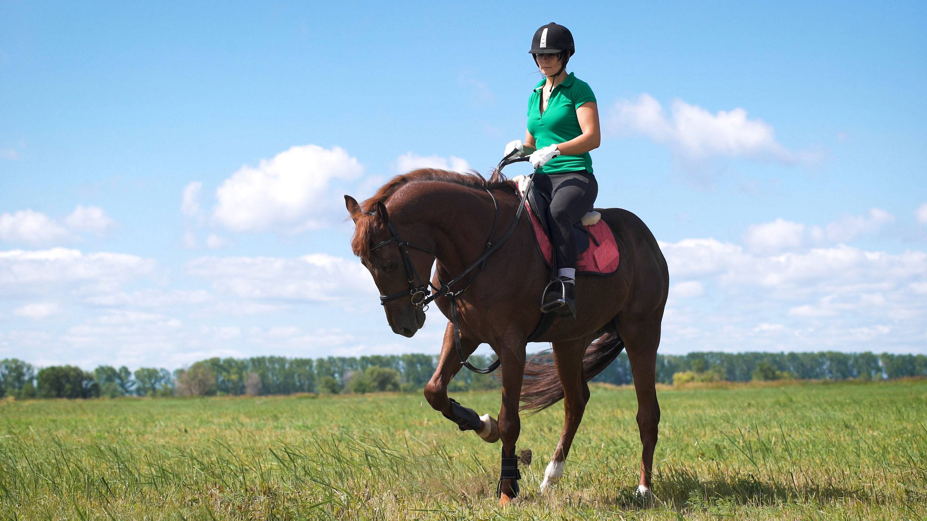 Woman on Horse in Field - Equitation Science