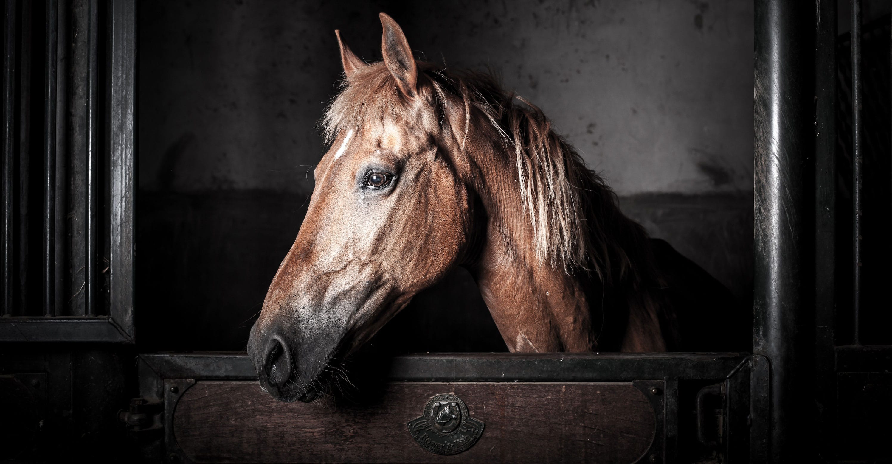 Horse in Stall - Close up on head