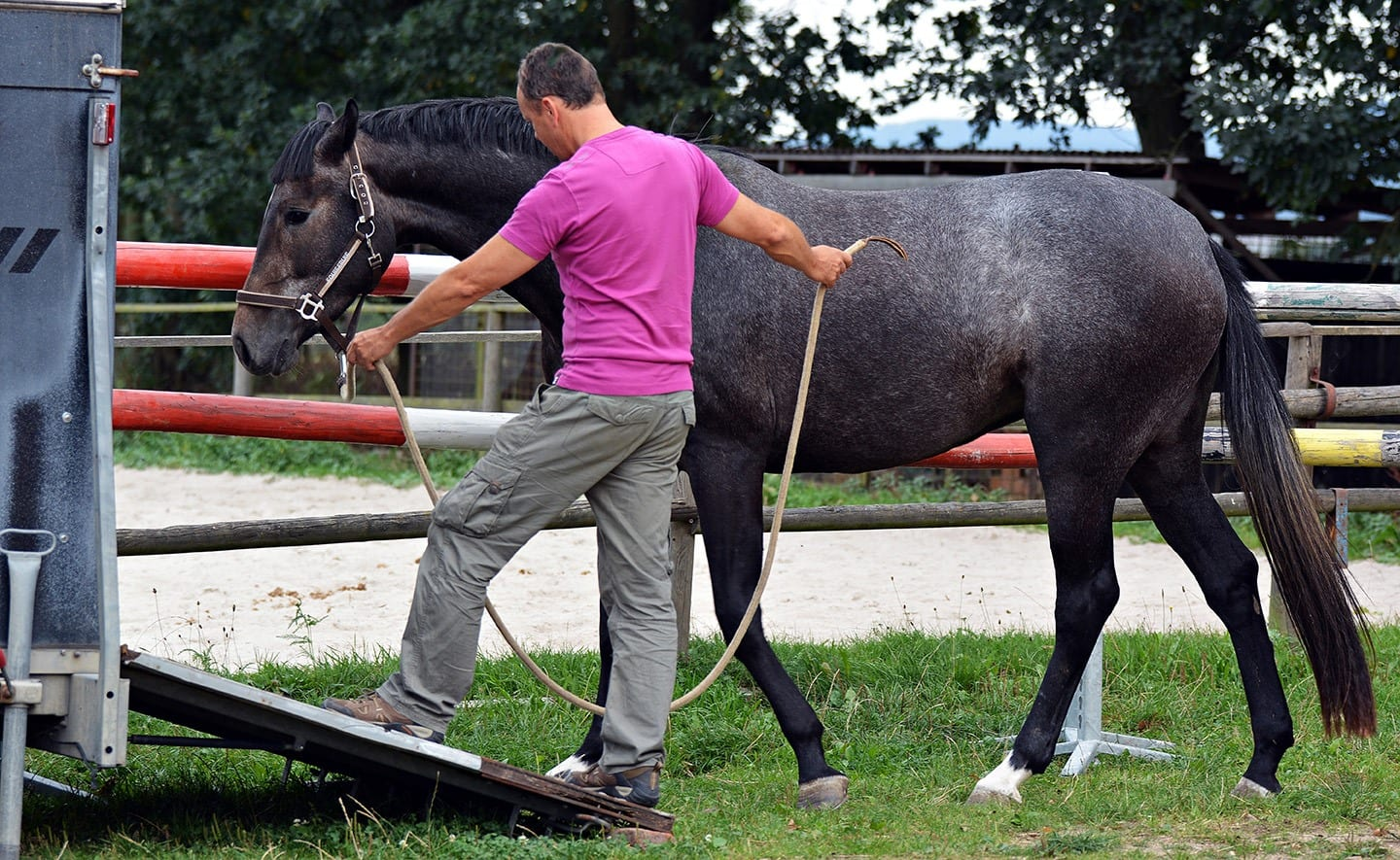 Professional Strategies for Healthy Horse Transport