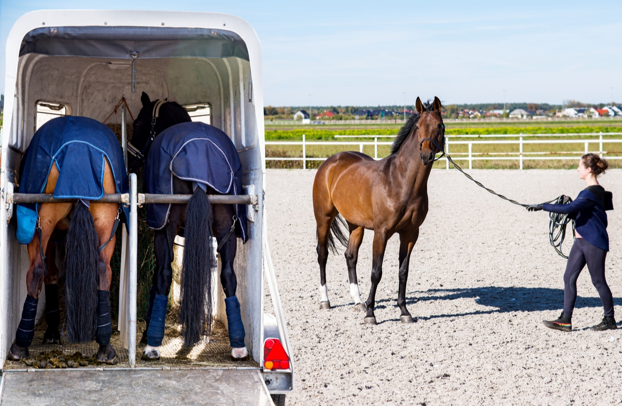 Auto trailer for transportation of performance horses