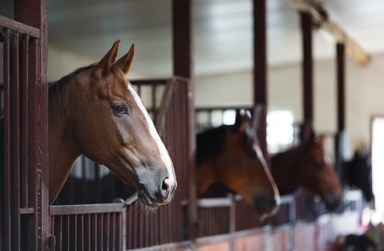 Horses looking out over stable doors